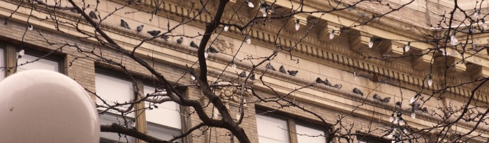 Birds-12282013