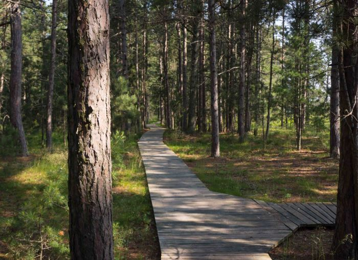 The boardwalk protects fragile land while providing access.