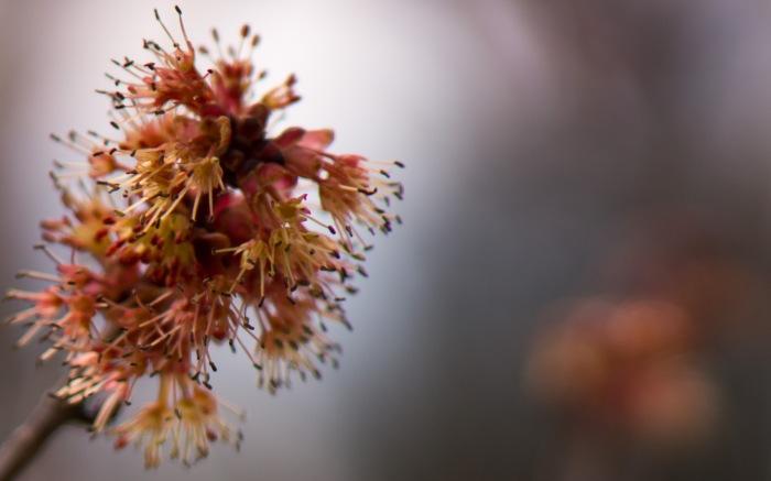 Flowering-4-02182015