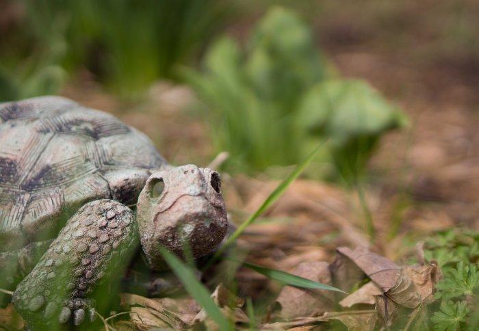 Turtle-2-02262015