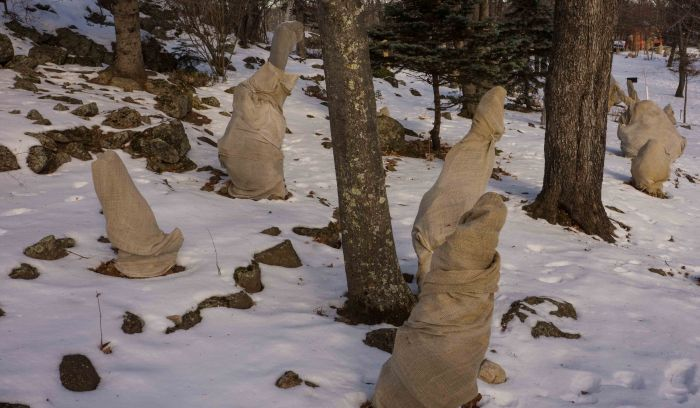 ShroudedTrees-3-04032015