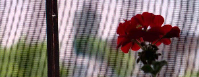 FlowerScreen-2-05182015