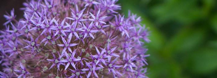 Purple2--06162015