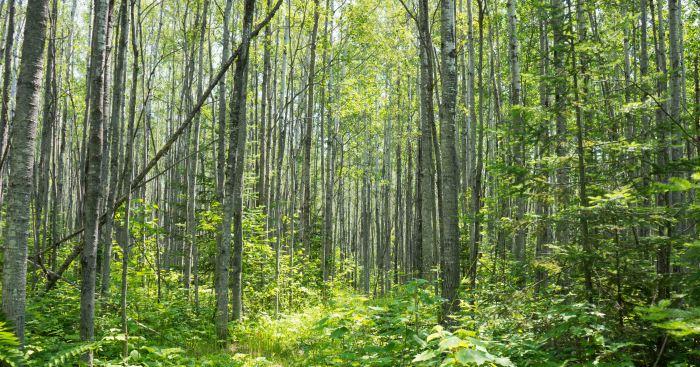 Trees-2-07102015