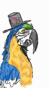 Macaw_0